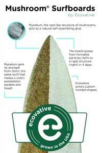 ecovative surfboard